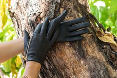 Close-up of woman hands with luxury python snakeskin gloves on a wood nature background on tropical Bali island, Indonesia. royalty free stock photography