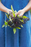 Close Up Of Woman Holding Bunch Of Elderberries Royalty Free Stock Images