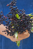 Close Up Of Woman Holding Bunch Of Elderberries Royalty Free Stock Photos
