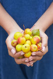 Close Up Of Woman Holding Crab Apples Stock Images