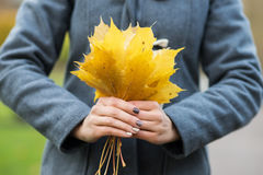Close-up of a woman holding fallen leaves Stock Image