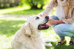 Close up of woman with labrador dog on walk. Family, pet, animal and people concept - close up of woman with labrador dog on walk in park Stock Images