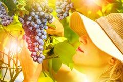 Farmer Checking Grapes Stock Photography