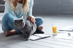 Close up of woman playing with cat on floor Royalty Free Stock Photography