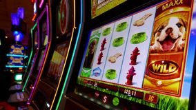 Close up woman playing slot machine stock video footage