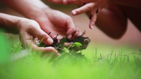 Close up of woman`s and child`s hands putting back organic soil on the land together over blurred green background