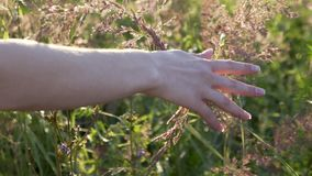 Close up woman`s hand holding grass lit evening sun slow mo
