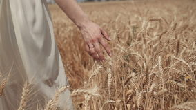 Close-up of woman`s hand walking through wheat field, dolly shot. Slow motion 100 fps. Good harvest concept. stock video
