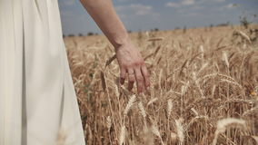 Close-up of woman`s hand walking through wheat field, dolly shot. Slow motion 100 fps. Good harvest concept.