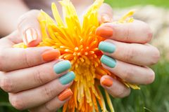 Close Up Of Woman's Hands On Flower Royalty Free Stock Photo