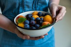 Woman holds bowl with plums and apricots. Close up woman`s hands with fresh stone fruits plums and apricots healthy diet concept stock photos