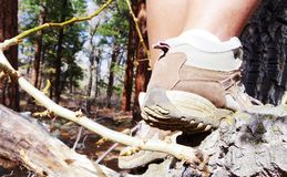 Close up of woman's shoes climbing a tree. Royalty Free Stock Photo