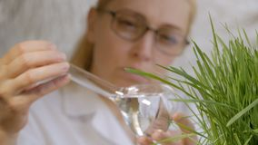 Close-up of a woman scientist looking at the contents of a glass flask with a clear liquid next to the growing green. Close-up of a woman scientist`s face in a stock video footage