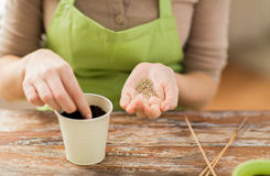 Close up of woman sowing seeds to soil in pot. People, gardening, seeding and profession concept - close up of woman hands with paper bag and trowel sowing seeds Royalty Free Stock Photos