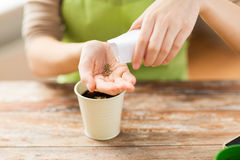 Close up of woman sowing seeds to soil in pot. People, gardening, seeding and profession concept - close up of woman pouring seeds from paper bag to hand Royalty Free Stock Photo
