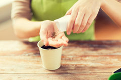 Close up of woman sowing seeds to soil in pot. People, gardening, seeding and profession concept - close up of woman pouring seeds from paper bag to hand Stock Photography