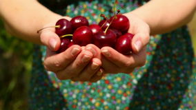 Close up on womans hands holding cherries Royalty Free Stock Photo