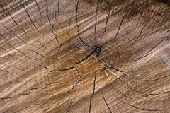 Close up on wood Royalty Free Stock Photos