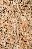 Close up of wood bark texture Stock Photography
