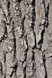 Close up of a wood brown bark texture in daytime outdoor. S Stock Image