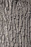 Close up of a wood brown bark texture in daytime outdoor. S Stock Images