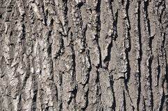 Close up of a wood brown bark texture in daytime outdoor. S Stock Photos