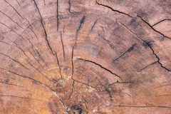 Close up wood cut tree trunk texture Stock Image