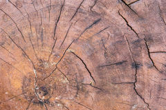 Close up wood cut tree trunk texture Stock Photography