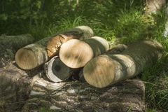 Close up of wood logs in dapple light royalty free stock images