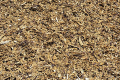Close-up of wood shavings Stock Photography