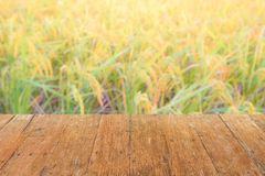 Close up wood top panel with blurred rice field background. Close up wood top panel with blurred rice field for background stock images