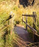 close up of a wooden bridge on a river plenty of herbs and rushes in the sunny light of the sunrise . The bridge has a wooden royalty free stock images