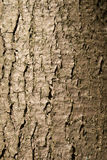 Close-up of a wooden crust of a living tree Stock Image