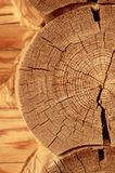Close-up wooden cut Stock Photos