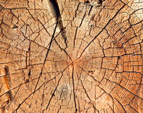 Close-up wooden cut texture Royalty Free Stock Photos