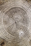 Close-up wooden cut texture Royalty Free Stock Image