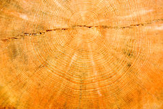 Close-up wooden cut texture. Stock Image