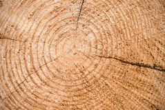 Close-up wooden cut texture Stock Photos