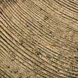 Close up wooden cut texture Stock Photography