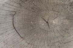 Close-up wooden cut texture Stock Photos