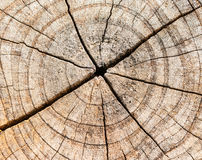 Close-up wooden cut texture Stock Photo