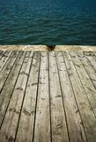 Close up of  wooden deck. For design royalty free stock images