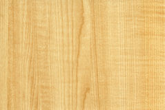 Close-up wooden Maple Thansau texture Stock Photography