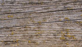 Close-up of wooden planks covered with moss Royalty Free Stock Photography