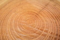 Close up of wooden texture of cut tree trunk Stock Images