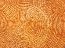 Close-up wooden texture Royalty Free Stock Image