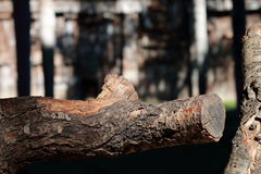 Close-up of wooden trunk. With background blur Stock Photo