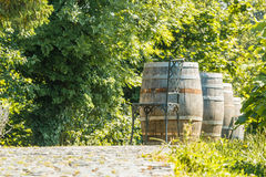 Close-up of wooden wine barrels in the green vineyard Stock Photo