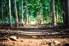 Close up of a woodland path Royalty Free Stock Photography