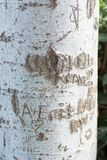 Tree trunk with cut-out word. Close-up of word carved on bark of tree trunk in bright sunlight stock photos